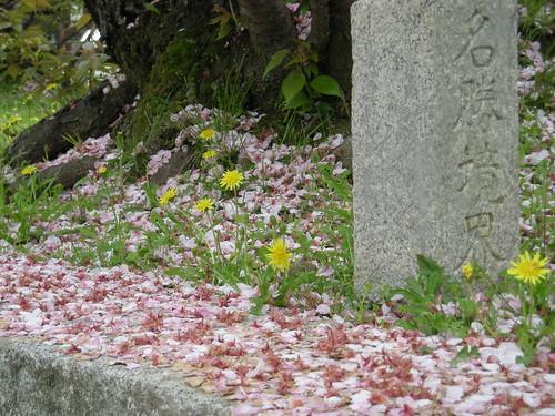 Fallen Petals & Dandelions