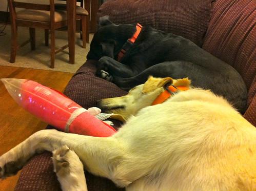 Tired doggies