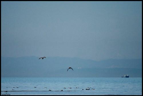 Aves en el Delta