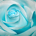 ice blue rose