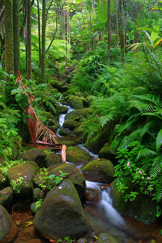 Stream in Hawaii Tropical Botanical Gardens