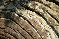 Driftwood Arcs