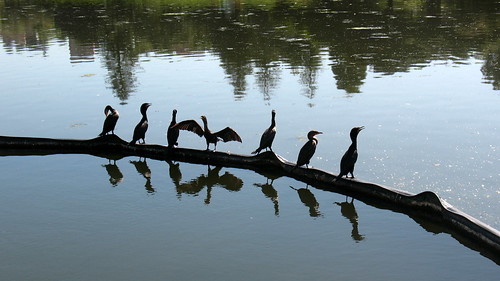 Birds on the water