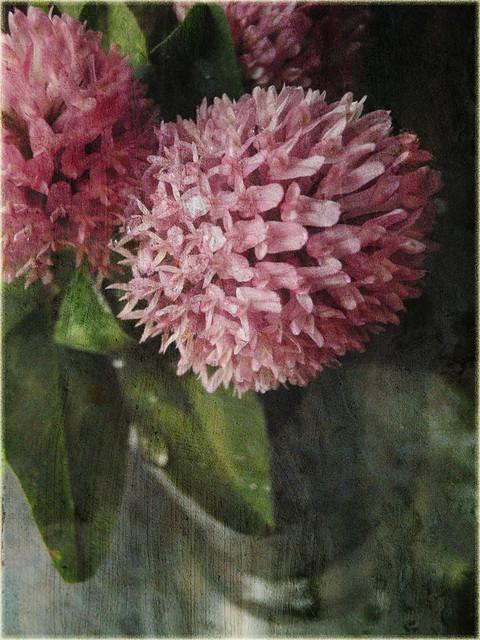 iyonas flower2
