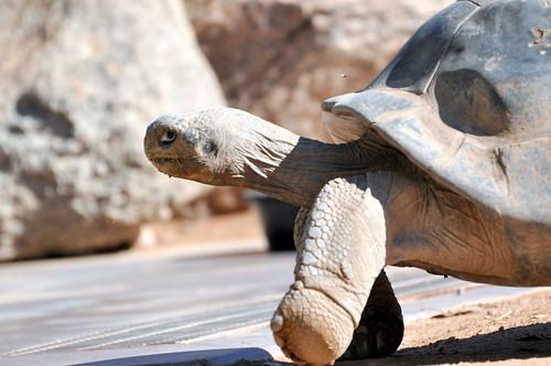 Tortoise foot!