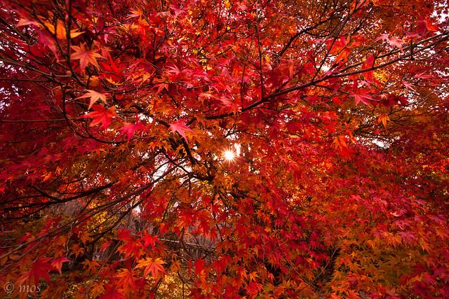 autumn color_1