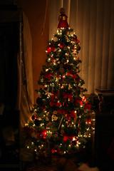 O Christmas Tree 2010