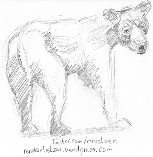 Sketching a bear from reference