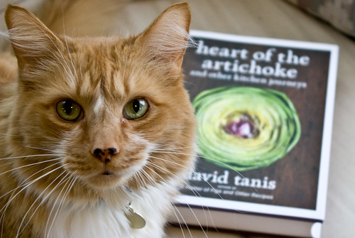 the cat and the cookbook