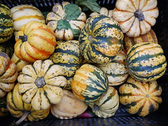 Greenmarket Winter Squash