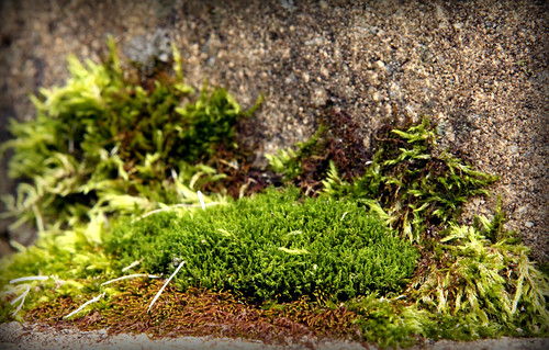 Winter greenery