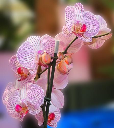 Webbs 03082010 (15) Orchid