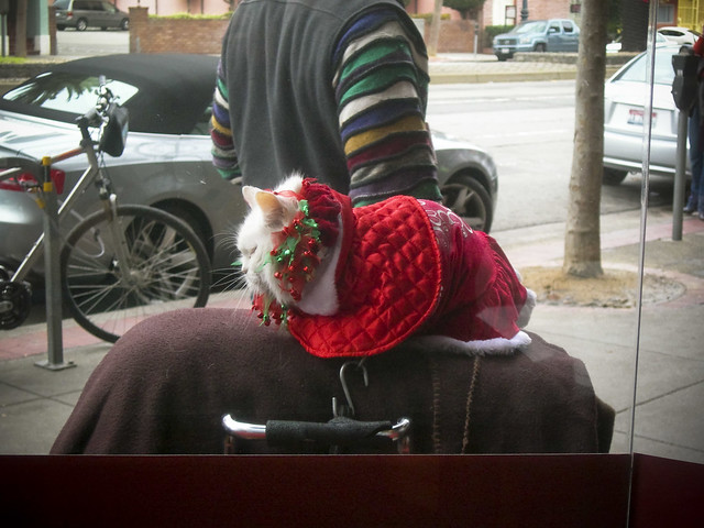 Christmas cat spotted, just outside Peets in the Castro