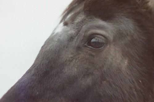 the black horse by heystrobelight
