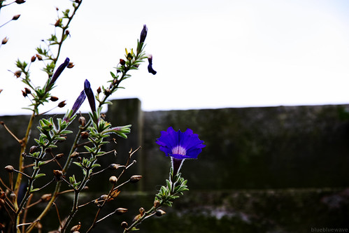 Lone flower in Clear Picture Style