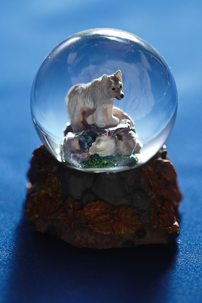 A snow wolf trapped inside a snow globe.