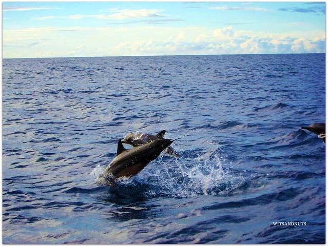 Dolphins of Balicasag Island