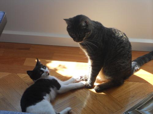 Tasting Room Cats