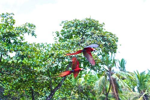 KLR 650 Trip Costa Rica 255