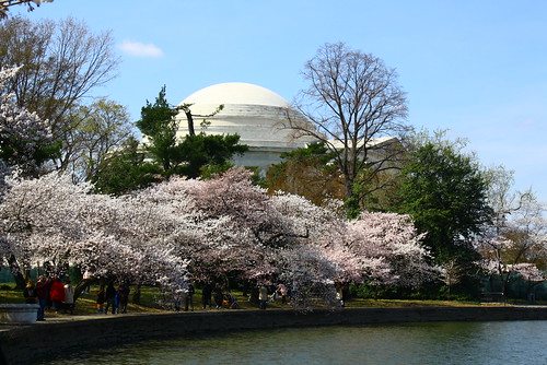 Jefferson Memorial + cherry blossoms