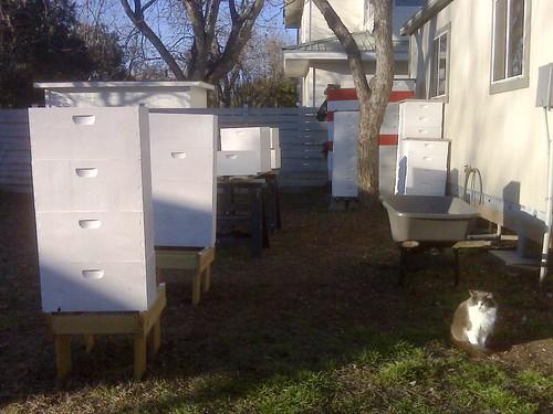 Smokey & bee boxes