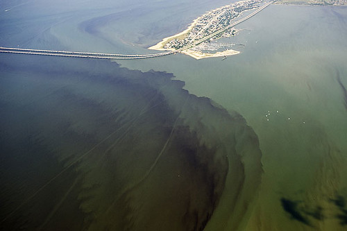 Algae Bloom in the Chesapeake Bay
