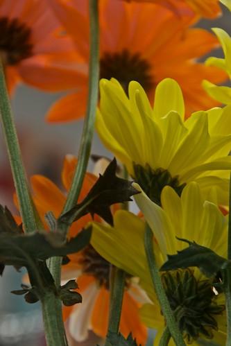 Yellow and Orange Flowers