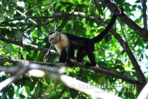 KLR 650 Trip Costa Rica 199