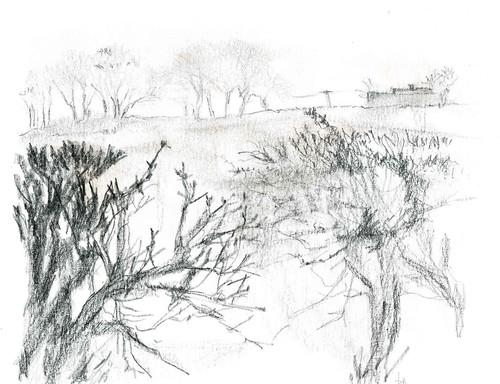 Martin's landscape