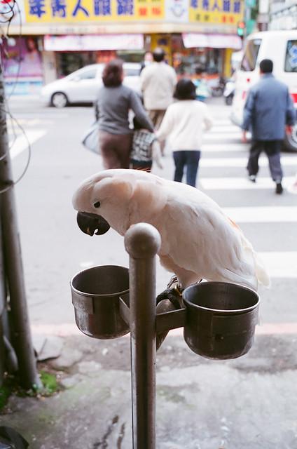 八德真善美眼鏡鎮店鸚鵡
