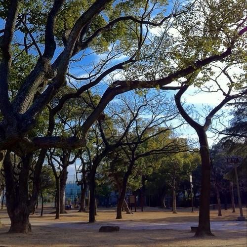 みんなー、(^o^)ノ < おはよー! 朝のお散歩! 近所の公園だよー!