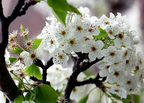 spring8