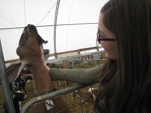 mama goats