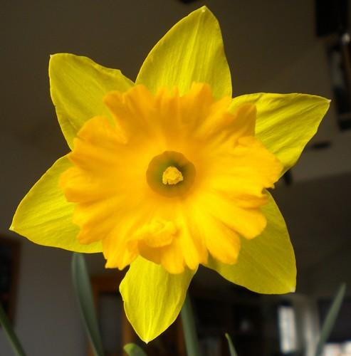 primera flor de primavera