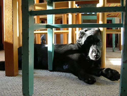 Simon asleep under the table