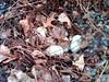 Nesting - 17/52