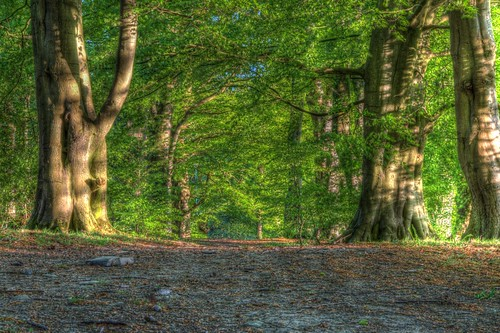 Clandyboye Woods by jonny.andrews65