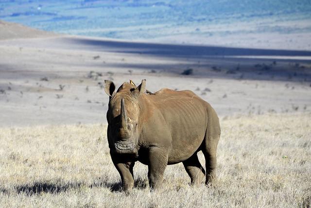 A rhino's smile