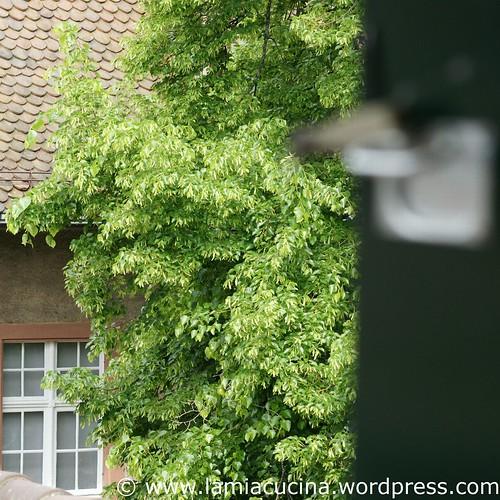 Küchenausblick 2_2011 04 29_3436