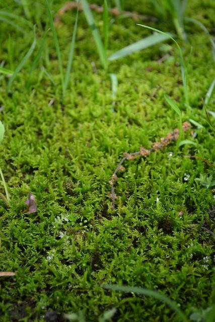 soft focus moss
