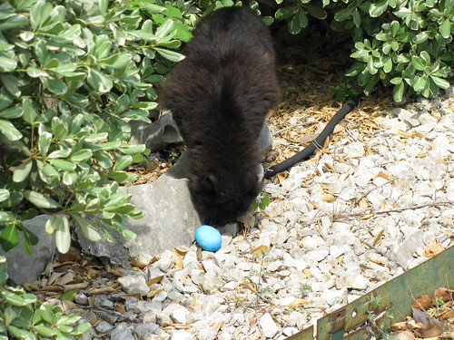 Fuzzkins found an egg