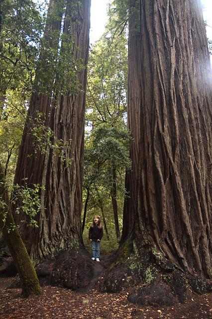 Big Basin Brae in Front of Big Tree