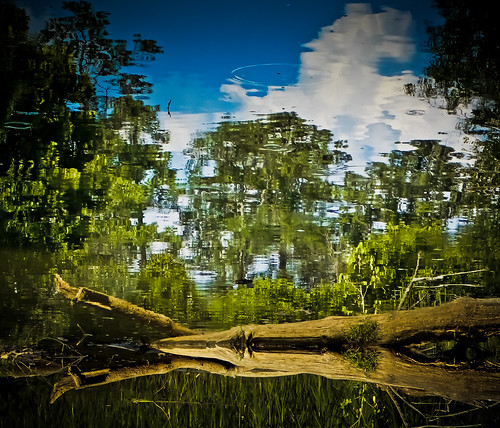 Blue Heron Nature Preserve (TheG-Forcers (Mike)) odc ourdailychallenge