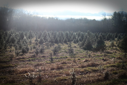tree farm forest