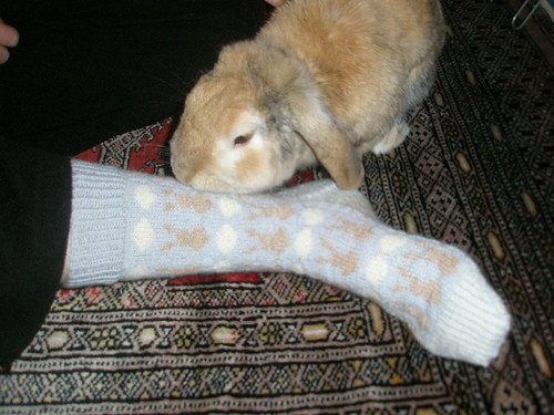 Snoopy and the bunny sock
