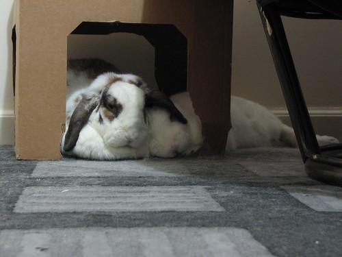 under-ear snuggle bunnies