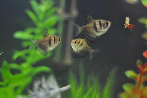 Unsere Fischbande