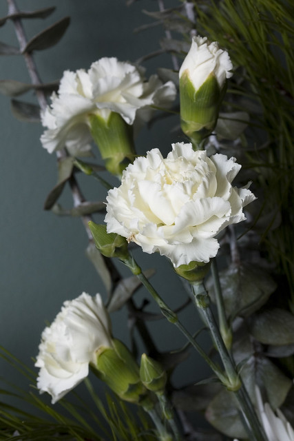 Close up - Carnations