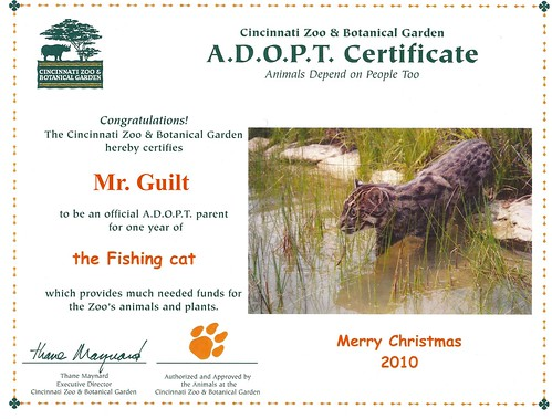 Fishing Cat Adoption (Protected)