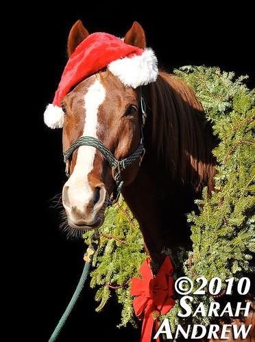 Fe-LEO Navidad